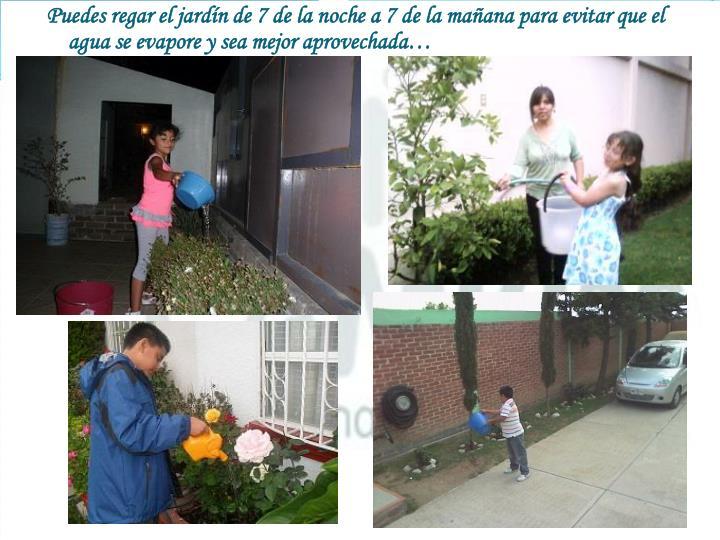 Puedes regar el jardín de 7 de la noche a 7 de la mañana para evitar que el agua se evapore y sea mejor aprovechada…