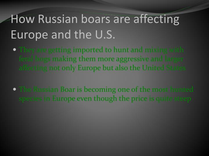 How Russian boars are affecting Europe and the U.S.