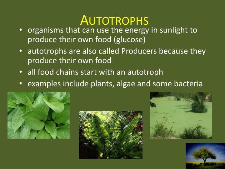 PPT - Ecology 101 PowerPoint Presentation - ID:2003136