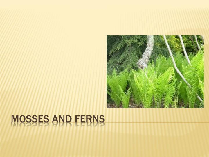 mosses and ferns n.