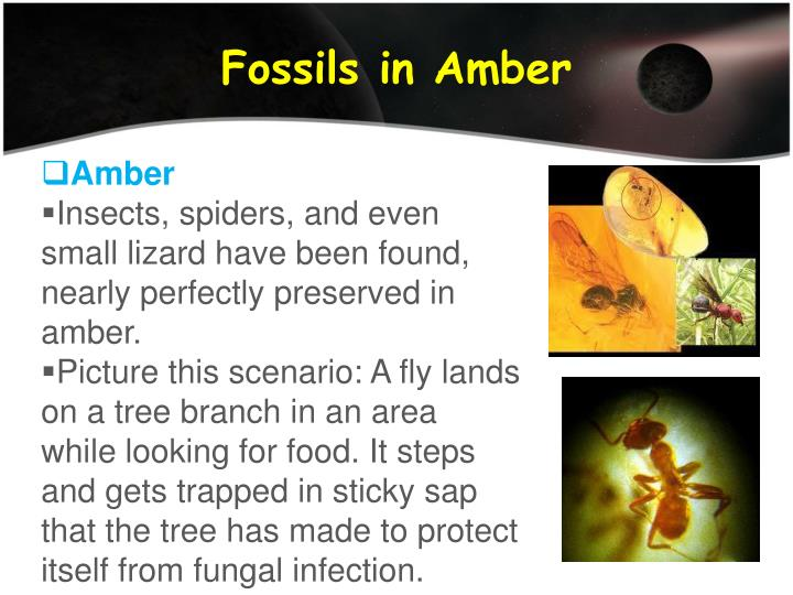 Fossils in Amber
