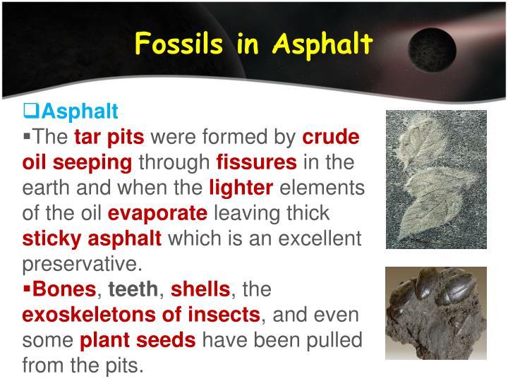 Fossils in Asphalt