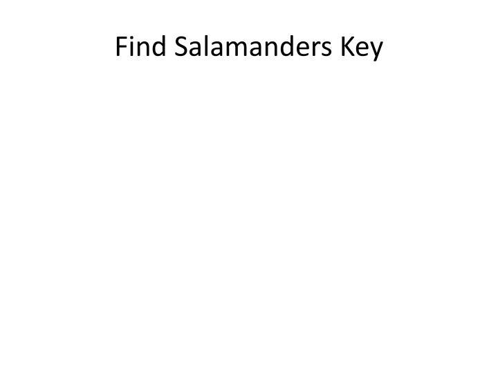 Find Salamanders Key