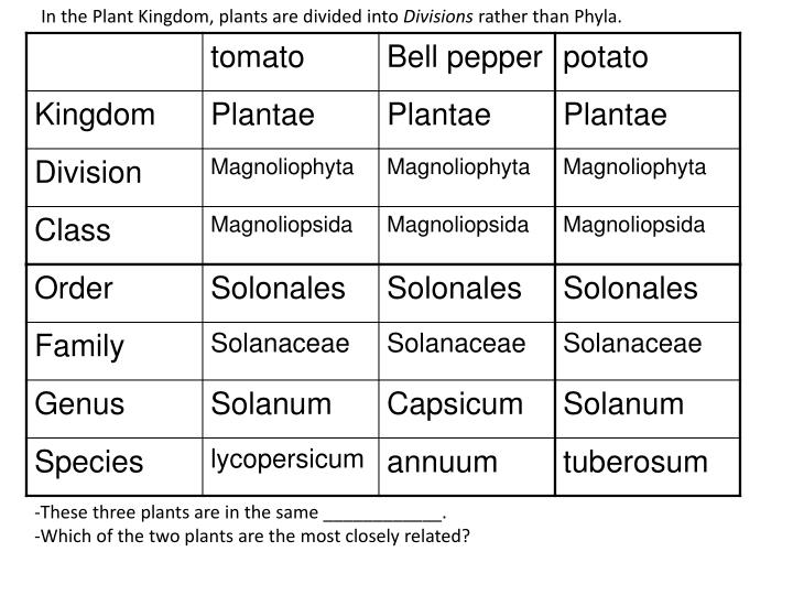 In the Plant Kingdom, plants are divided into