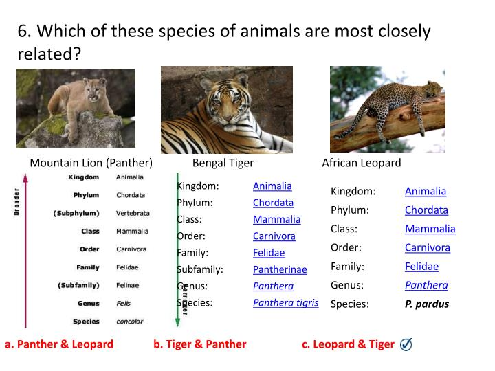 6. Which of these species of animals are most closely related?