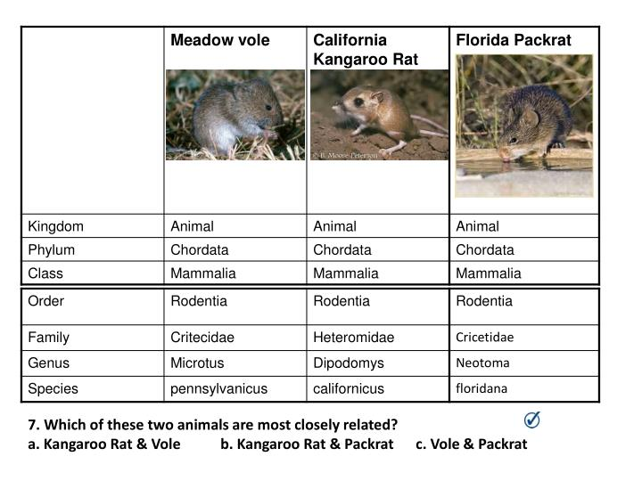 7. Which of these two animals are most closely related?