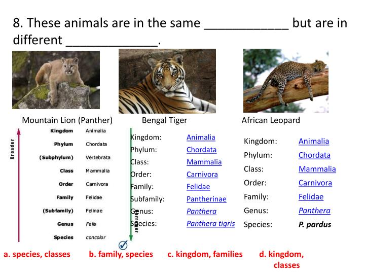 8. These animals are in the same ____________ but are in different _____________.