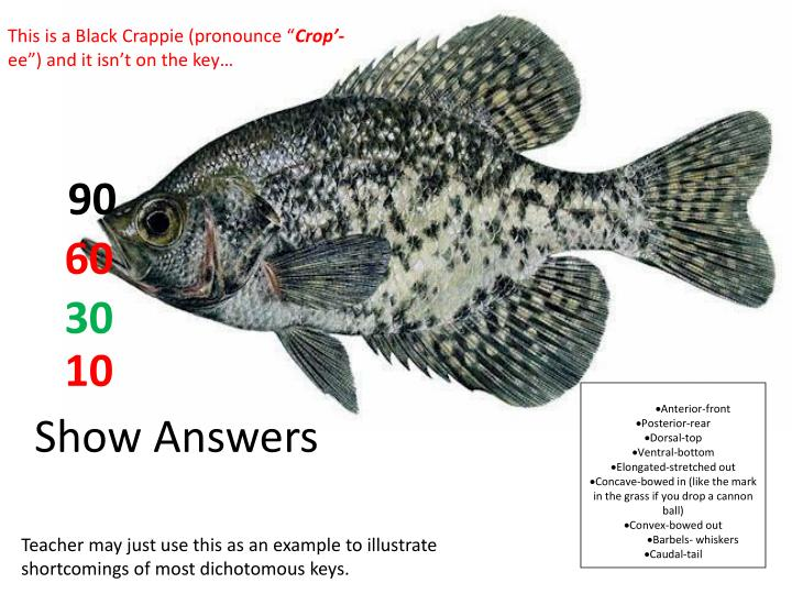 """This is a Black Crappie (pronounce """""""