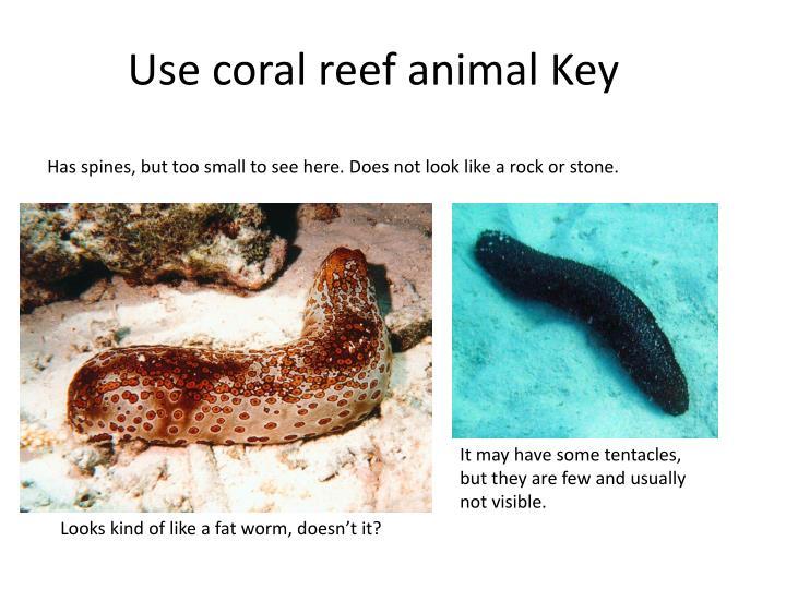 Use coral reef animal Key
