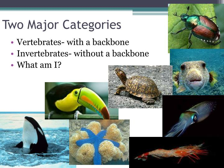 Two Major Categories