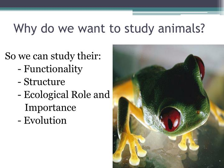 Why do we want to study animals?