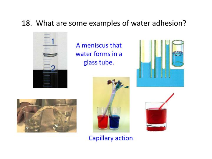 18.  What are some examples of water adhesion?