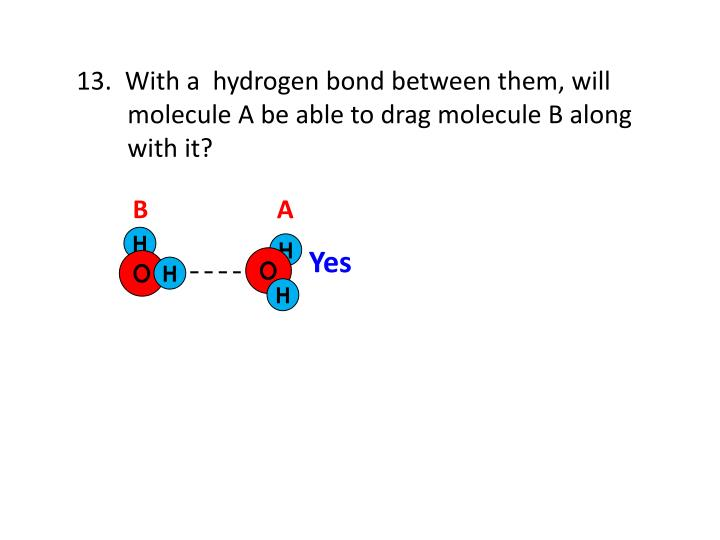 13.  With a  hydrogen bond between them, will
