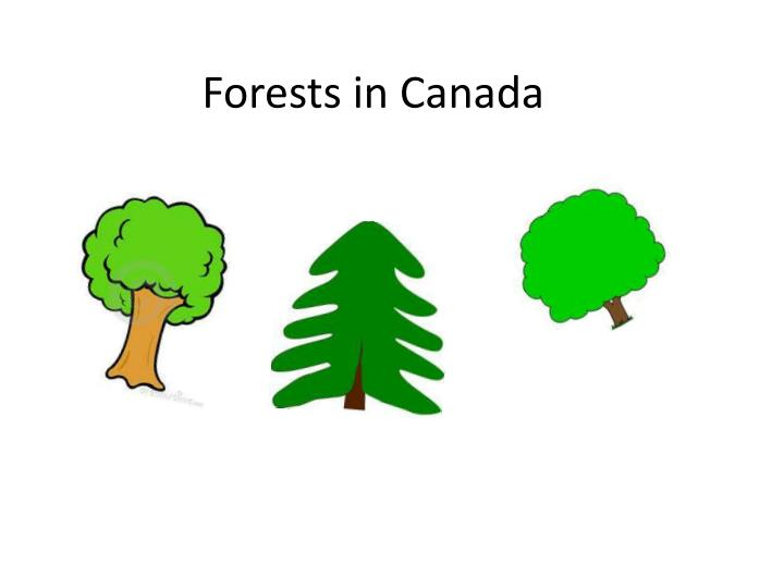 forests in canada n.