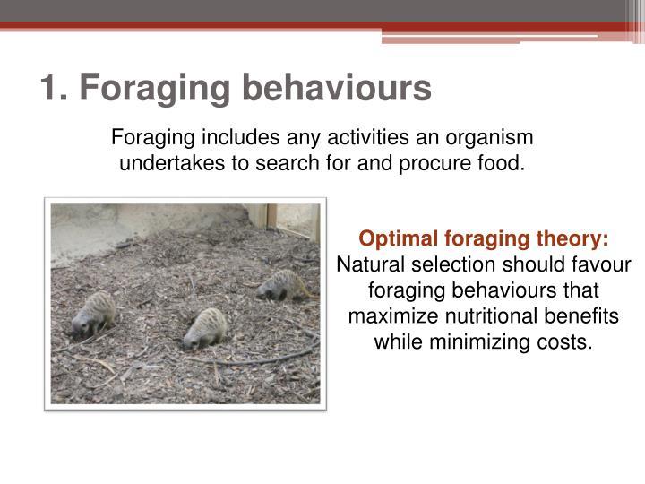 1. Foraging behaviours