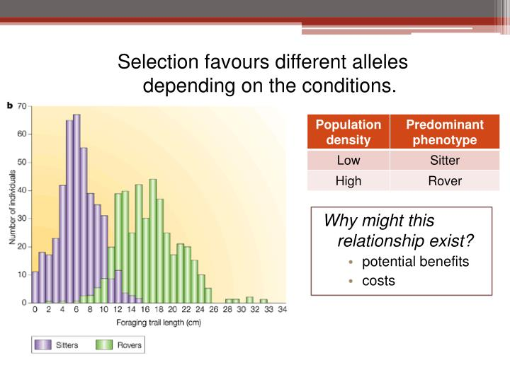 Selection favours different alleles