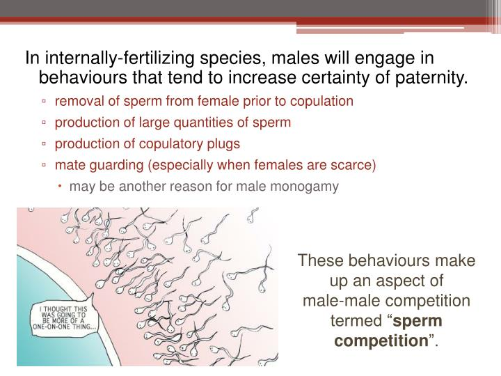 In internally-fertilizing species, males will engage in behaviours that tend to increase certainty of paternity.