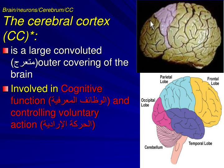 the brain and cognitive function Is there any association between gout and your cognitive function researchers are still in the process of understanding this link.