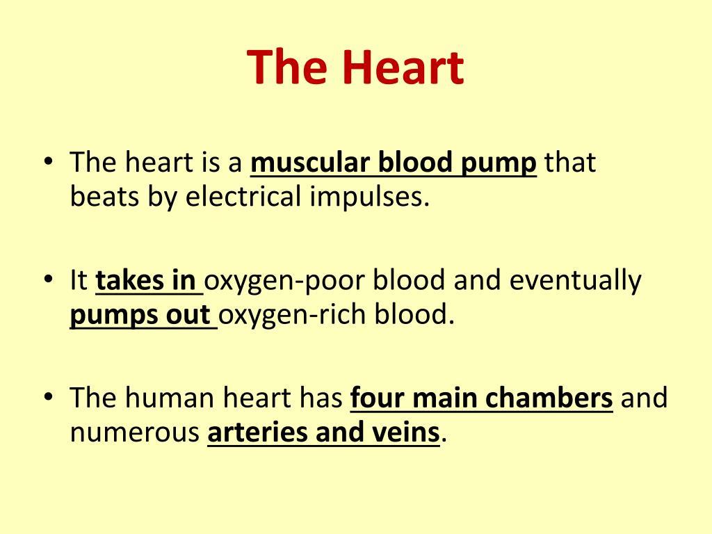 PPT - Circulatory System PowerPoint Presentation - ID:2010408