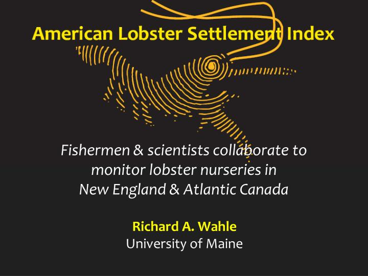 fishermen scientists collaborate to monitor lobster nurseries in new england atlantic canada n.