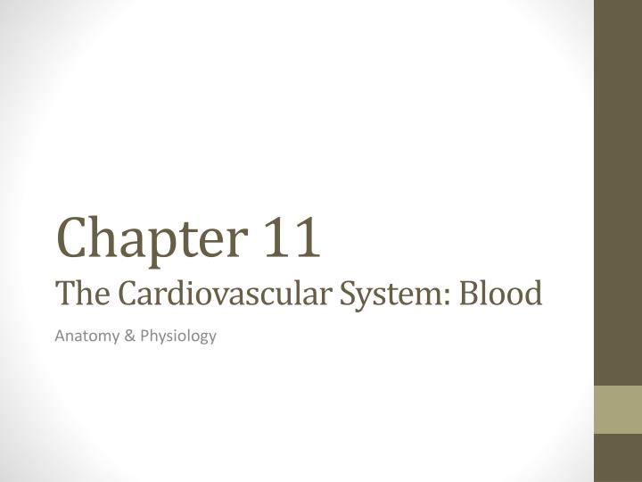 chapter 11 the cardiovascular system blood n.