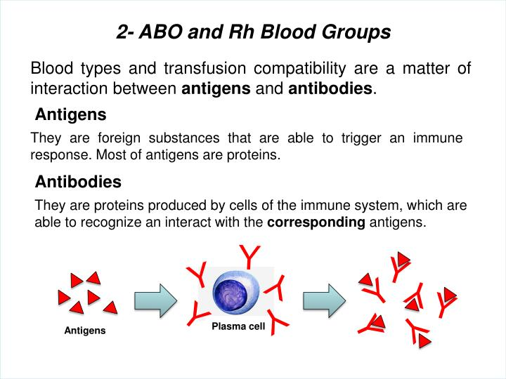 2- ABO and Rh Blood Groups