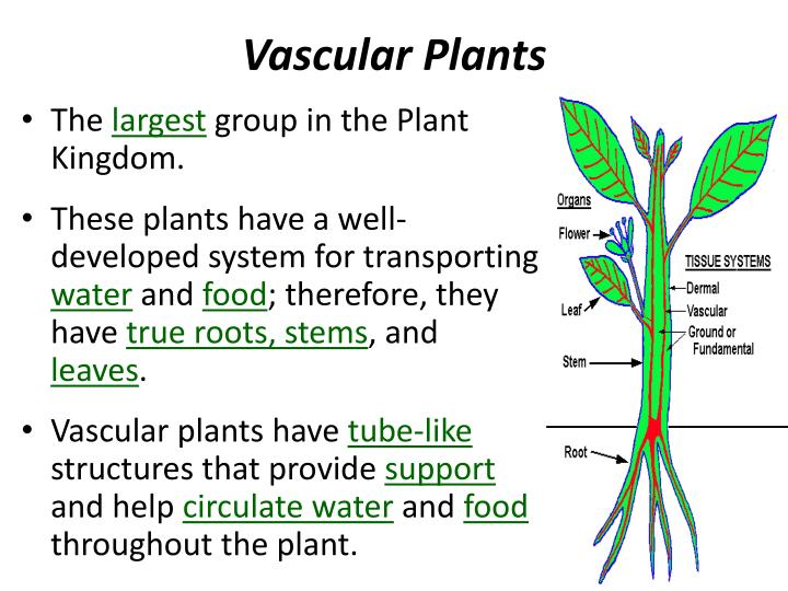 Roots In Food Production For Plants