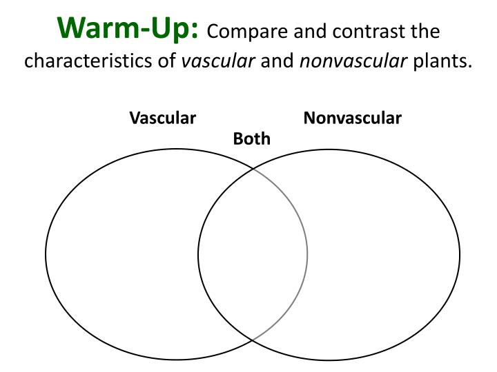 warm up compare and contrast the characteristics of vascular and nonvascular plants n.