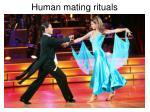 human mating rituals4