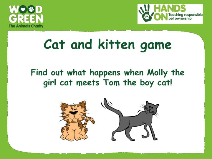 cat and kitten game f ind out what happens when molly the girl cat meets tom the boy cat n.