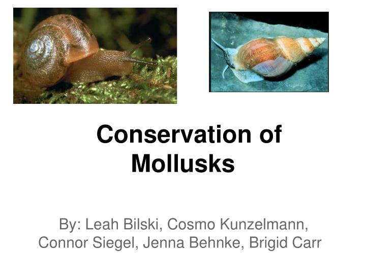 conservation of mollusks n.