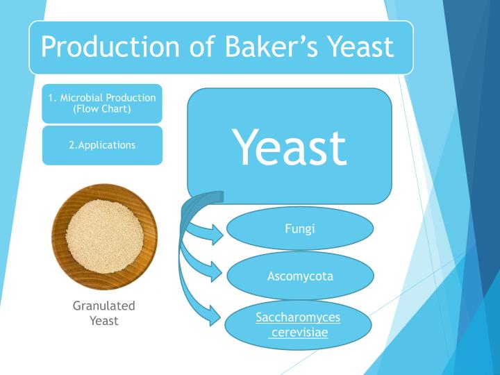 Ppt production of bakers yeast powerpoint presentation id2012040 production of bakers yeast toneelgroepblik Images