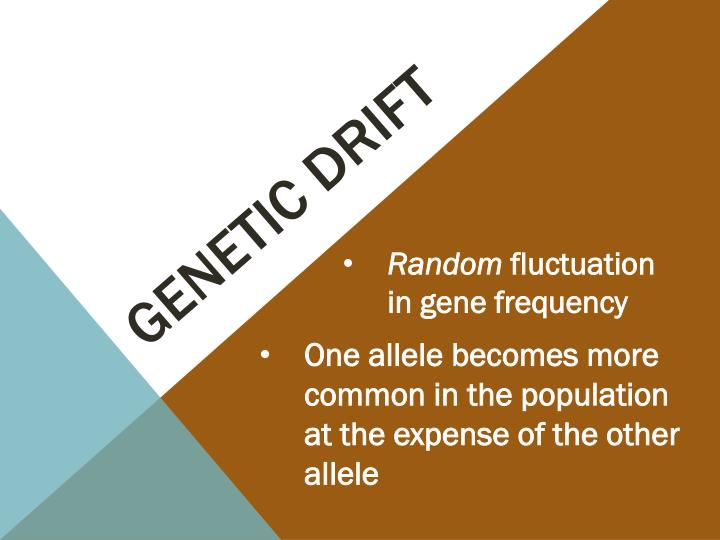 genetic drift n.