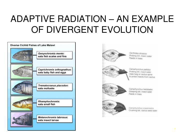 Ppt Speciation Patterns Of Evolution Powerpoint Presentation