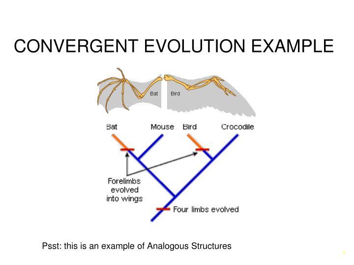 Ppt Speciation Amp Patterns Of Evolution Powerpoint