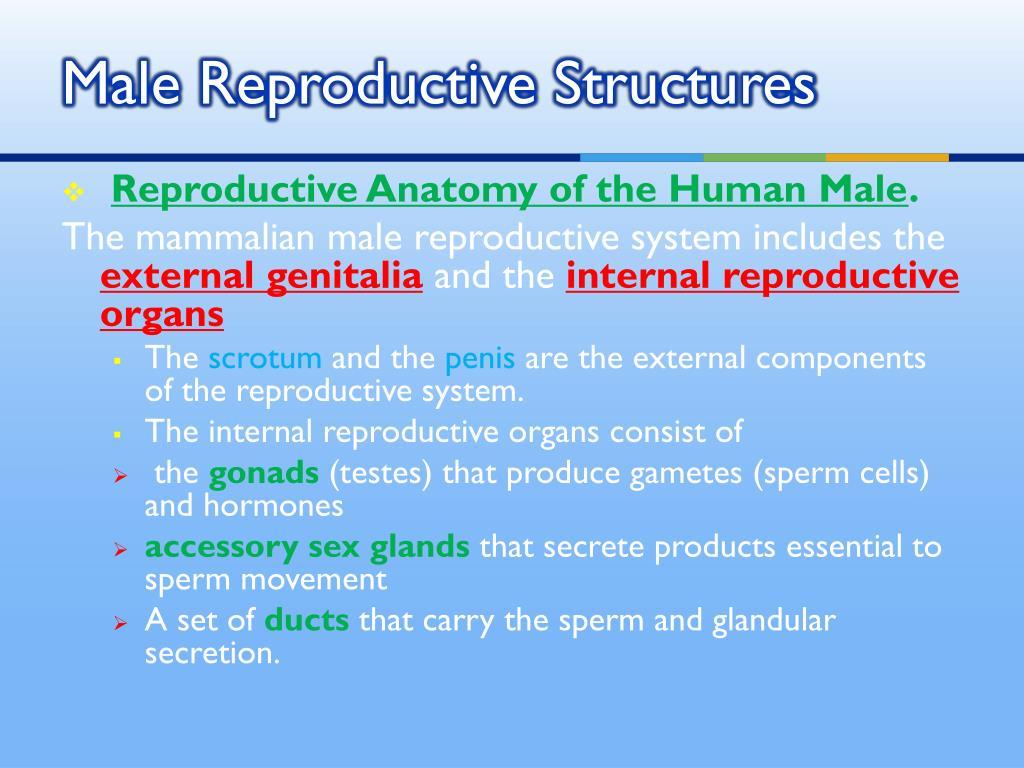 Similarities Between Male And Female Gametes