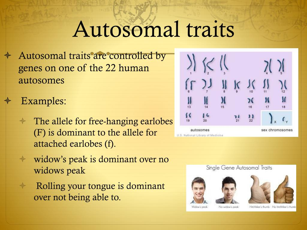 autosomal sex related traits in Coquitlam