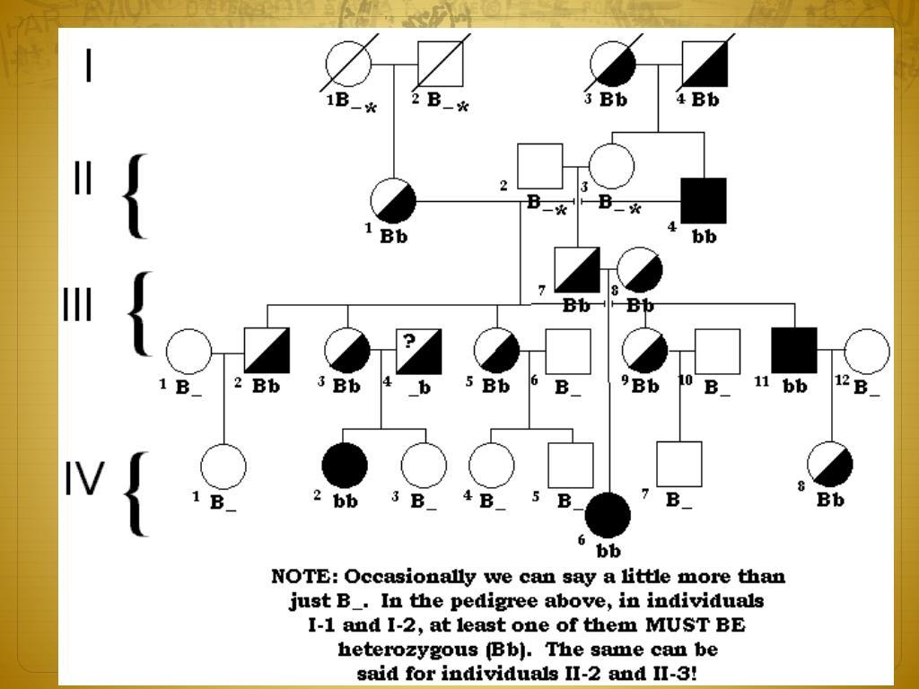 Ppt - Genetics Powerpoint Presentation, Free Download - Id -7947