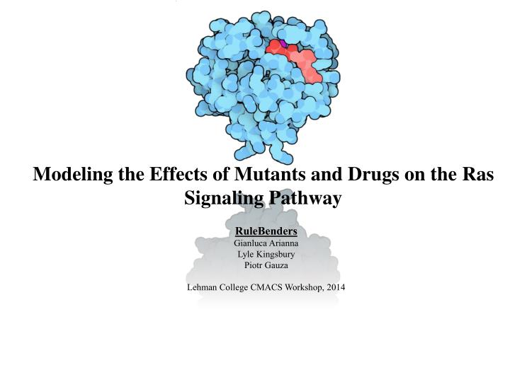 modeling the effects of mutants and drugs on the ras signaling pathway n.