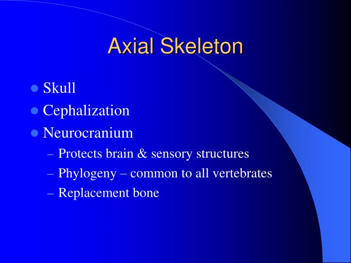 axial skeleton n.