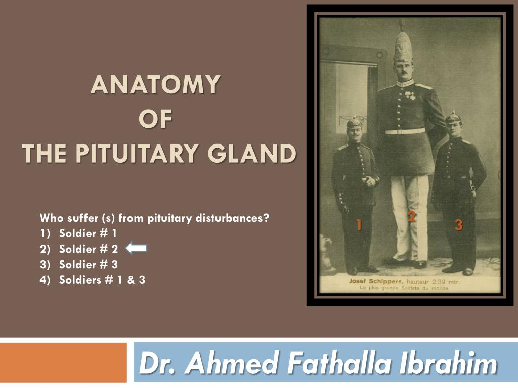 Ppt Anatomy Of The Pituitary Gland Powerpoint Presentation Id