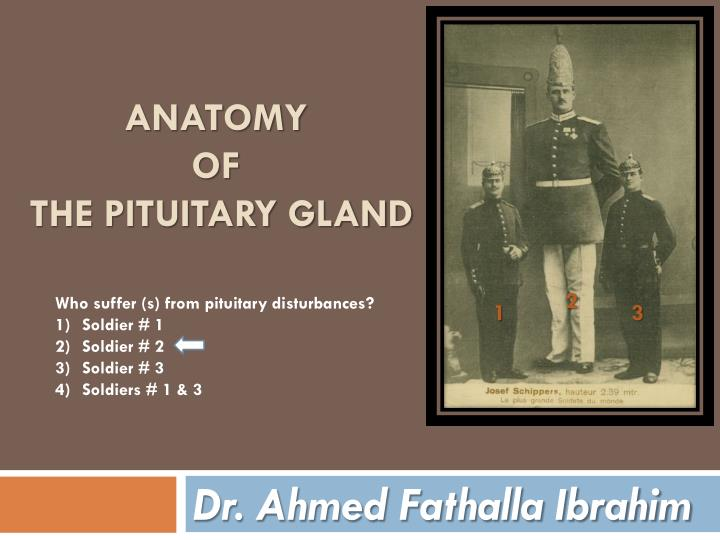 anatomy of the pituitary gland n.