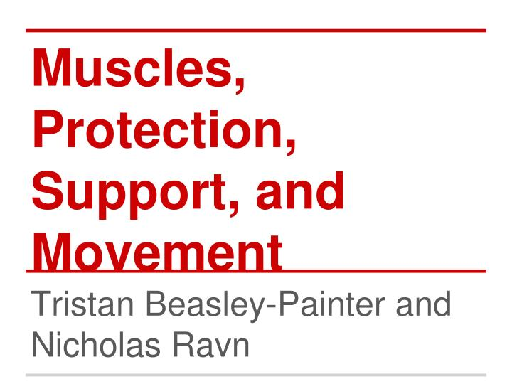 muscles protection support and movement n.
