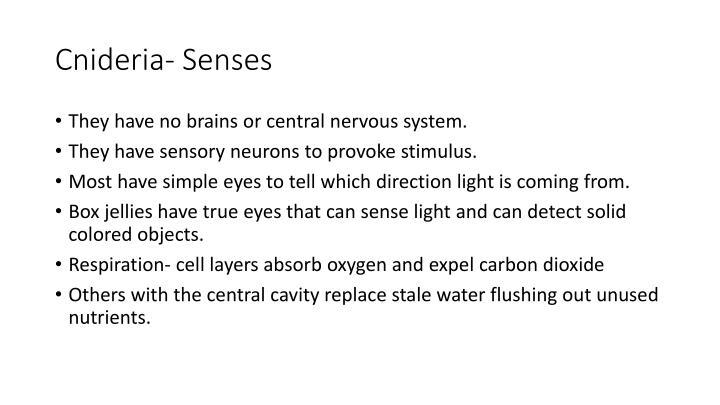 Cnideria- Senses