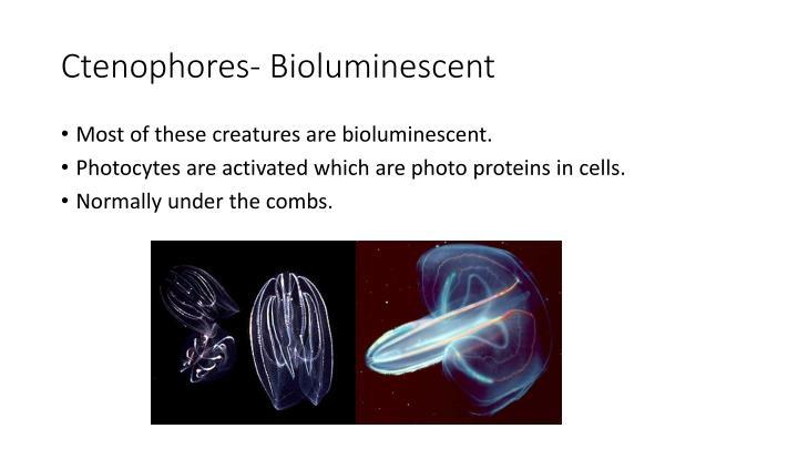 Ctenophores- Bioluminescent