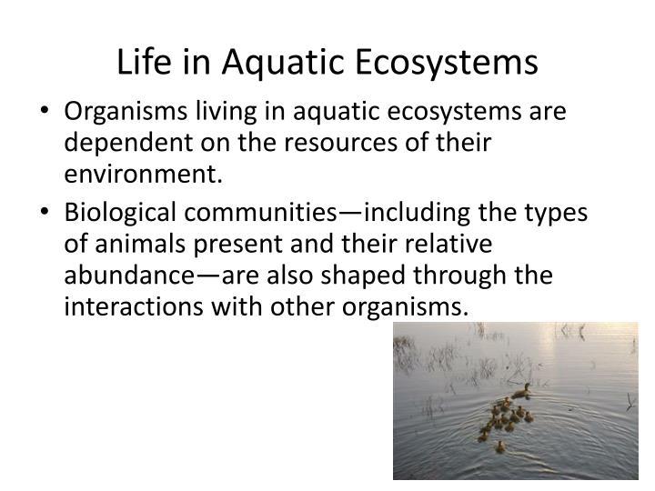 Life in Aquatic Ecosystems