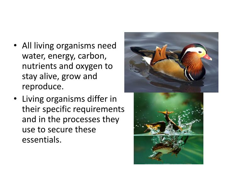 All living organisms need water, energy, carbon, nutrients and oxygen to stay alive, grow and reproduce.