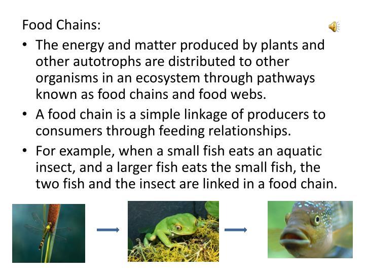 Food Chains: