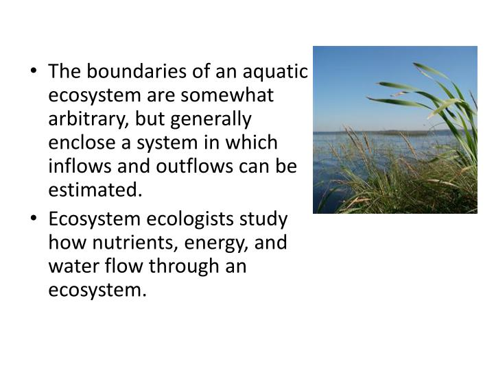 The boundaries of an aquatic ecosystem are somewhat arbitrary, but generally enclose a system in which inflows and outflows can be estimated.