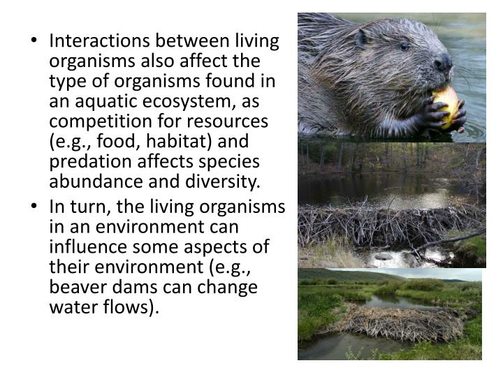 Interactions between living organisms also affect the type of organisms found in an aquatic ecosystem, as competition for resources (e.g., food, habitat) and predation affects species abundance and diversity.